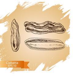 Sketch - bakery ciabatta vector