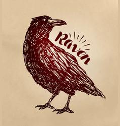 Vintage drawn raven crow bird sketch vector