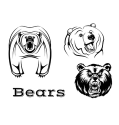 Angry grizzly bears characters vector image vector image