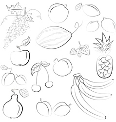 hand drawn fruit sketch vector image