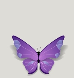 Bulk butterfly on pure background vector
