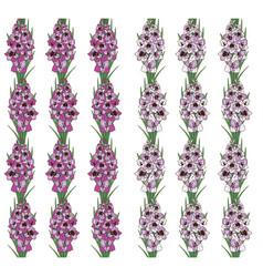 Seamless pattern flowers gladiolus on white vector