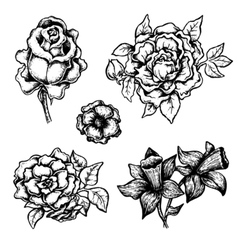 Set of black and white ink style flowers vector image