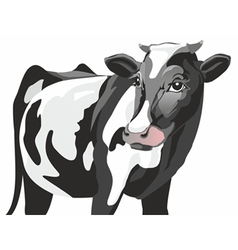 Friesian cow vector