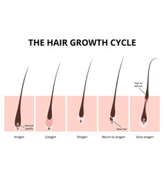 Hair structure vector