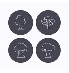 Pine tree oak-tree icons vector image