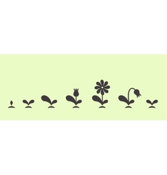 Green plant growing seed foliage flower set vector