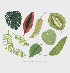 Engraved hand drawn tropical or exotic leaves vector