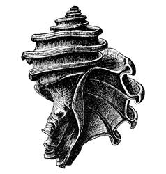 Ecphora gardnerae vector