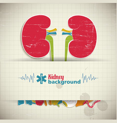 flat kidney background vector image