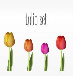 Realistic tulips set vector