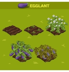 Set 2 isometric stage of growth eggplant vector
