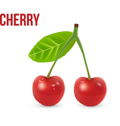 Cherry isolated on white background vector