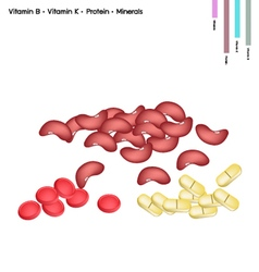 Kidney bean with vitamin b k protein and minerals vector