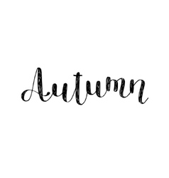 Autumn Brush lettering vector image