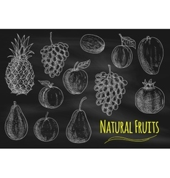 Natural fruits chalk sketch icons on blackboard vector