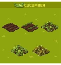 SET 3 Isometric Stage of growth Cucumber vector image