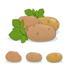Potato vegetable edible fruit vector