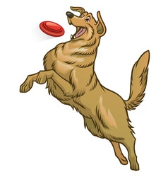 Happy golden retriever dog playing frisbee vector