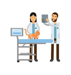 Two veterinary doctors examining red cat in vet vector