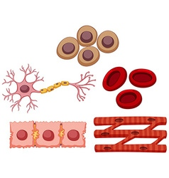 Different type of stem cell vector