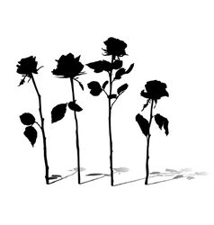 Roses silhouettes vector