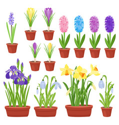 Spring flowers in flower pots irises lilies of vector