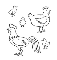 Outlined chicken family vector