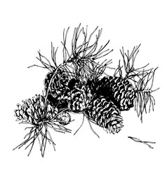 branch of pine with cone hand drawn image vector image vector image