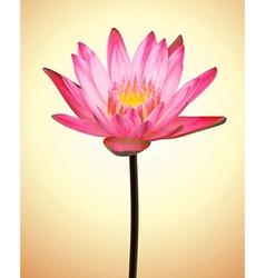 Oriental Flower Lotus Exotic Plant vector image