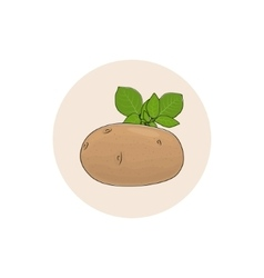 Icon potato vegetable vector