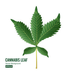 marijuana leaf green hemp cannabis sativa vector image