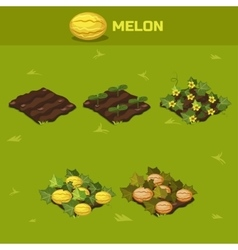 Set 6 isometric stage of growth melon vector