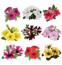 Set of multicolored petunias vector image vector image