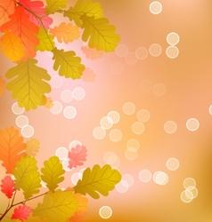 Oak Tree Leaves of Autumn vector image