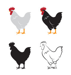 chicken design on white background hen farm vector image vector image