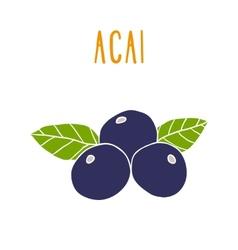 Acai berries vector image vector image