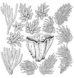 Sketch of corals set vector