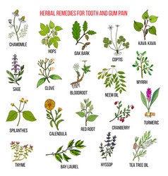 Best herbal remedies for tooth and gum pain vector