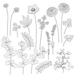 flowers outline2 vector image