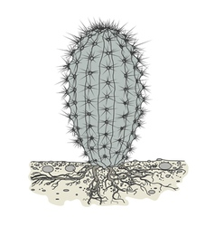 Cactus in soil vector