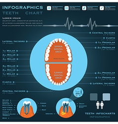 Teeth infographic infocharts health and medical vector