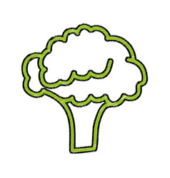 Broccoli fresh vegetable icon vector
