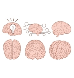 Human brain flat set vector