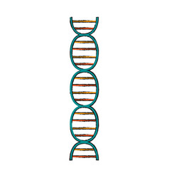 isolated dna design vector image vector image