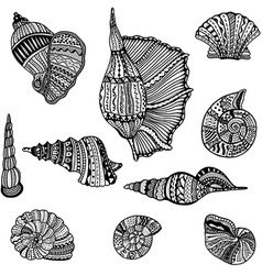 Shell Icon Set vector image vector image