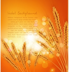 Background with gold ears of wheat and sunrays vector
