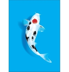 Koi carp on blue vector
