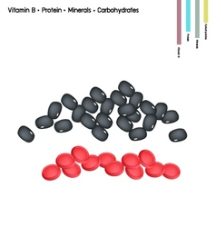 Kidney bean with vitamin b protein minerals vector