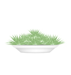 Small palm trees in a flower pot vector